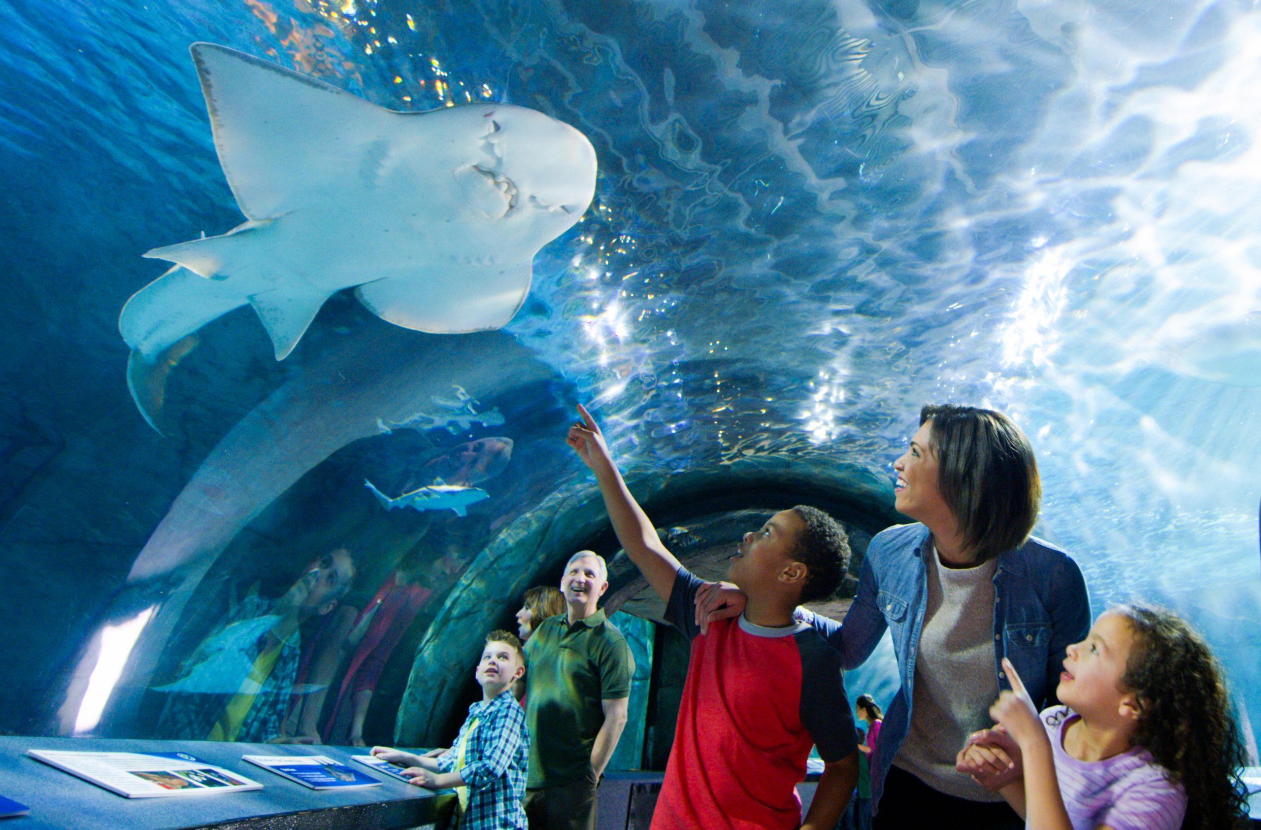 family at Newport Aquarium shark tunnel