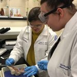 bio-medical sciences at Ignite Institute